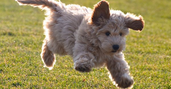 Puppy Bounce Puppy-Bounce Puppy-Bounce
