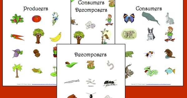 Producers Consumers Decomposers Science Lessons