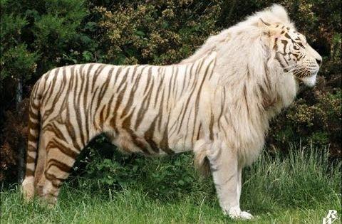 Los 5 Animales Hibridos Mas Impresionantes Youtube Exotische Haustiere Komische Tiere Seltsame Tiere