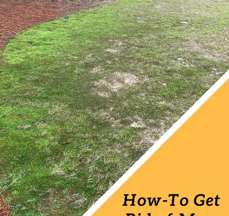 0e35d6ee46540b7ff58d1521207b9b30 - How To Get Rid Of Moss In Grass Naturally