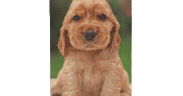 Coker Spaniel Puppy Wood Flash Drive Zazzle Com Spaniel Puppies Puppies Cocker Spaniel Puppies