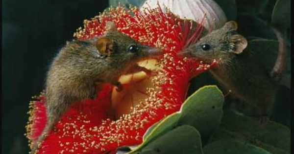 10 Awesome Animals Whose Names Start With The Letter N Australian Animals Possum Weird Animals