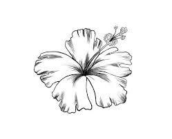 Fleur D Hibiscus Dessin