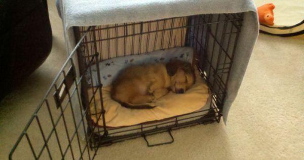 Amazon Com Midwest Icrate Double Door Folding Metal Dog Crate 42