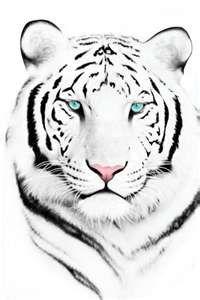 White Tiger Tattoos White Tiger Tattoo Animals Tiger Face