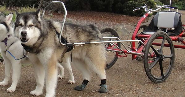 Official Site For The Sacco Dog Carts Our Dog Cart Is The Best