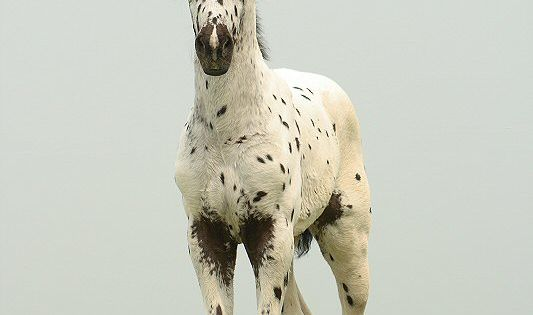 beautiful Appaloosa colt-- one of my 2 absolute favorite breed of horses!!