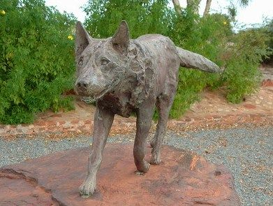 This Is A Statue Of Red Dog A Dog Who Exemplified Loyalty Bravery And Heart He Was Deeply Respected And Western Australia Travel Western Australia Dog Art