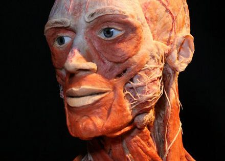 essay about body worlds