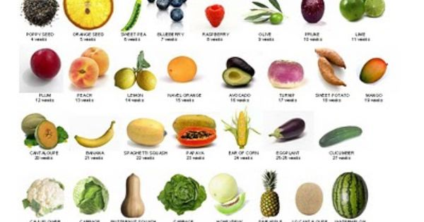Fruits Name With Picture In English For Kids image information ...
