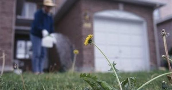 How To Mix Bleach Or Vinegar Amp Water To Kill Weeds
