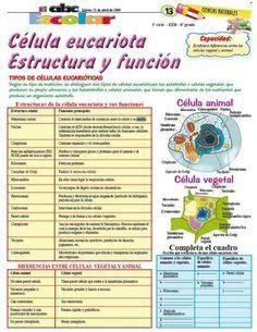 Célula Eucariota Estructura Y Función Edicion Impresa