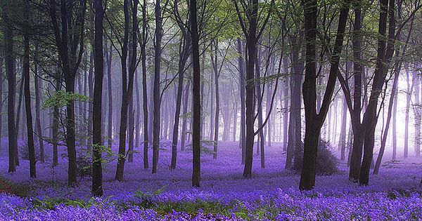 Yes! It does look just like this! Idless Woods near Truro Cornwall.