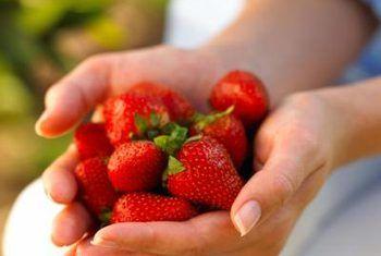 Homemade Fertilizer For Strawberry