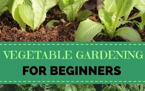Vegetable Gardening For Beginners Gardens And