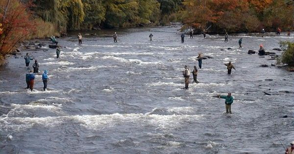 Salmon fishing pulaski ny salmon river romance for Best time for salmon fishing in pulaski ny