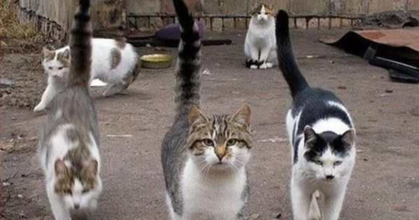 Funny Pictures With Captions | Funny cats With Captions 2012 | Funny