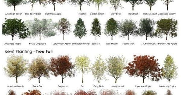 Diff rents type de plantes arbres buissons pour le for Type de plante