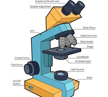 Microscope    Diagram      Science Printables   Pinterest