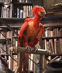 The Phoenix Cores Harry Potter Creatures Phoenix Harry Potter Harry Potter Wand