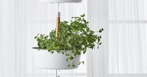 Bittergurka Hanging Planter White Fresh Herbs Ikea And