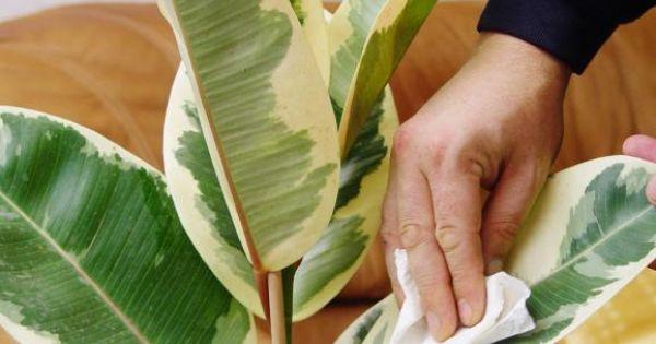 Zimmerpflanzen: Pflegetipps | Haus Und Garten Pflegetipps Hangende Zimmerpflanzen Raume Einfach Begrunen