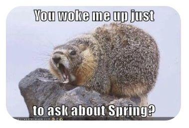 Groundhog Day Wake Up Call In 2021 Groundhog Animals Groundhog Day