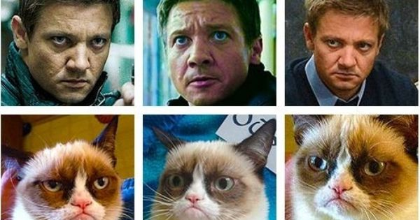 Jeremy Renner is... Grumpycat - I laughed way too hard at this.