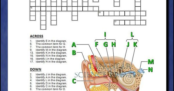 Ear Crossword With Diagram  Editable