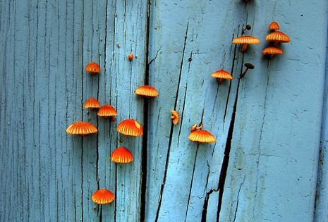 Mushrooms on the door.. Nice colors..