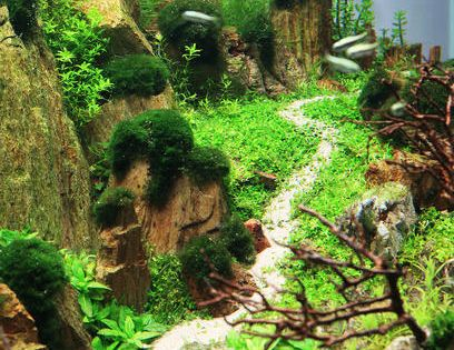 2013 Aga Aquascaping Contest Entry 310 Animals At Repinned Net