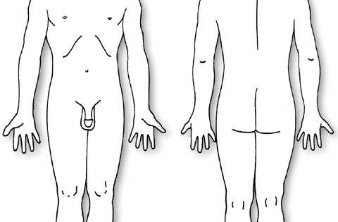 human body diagram