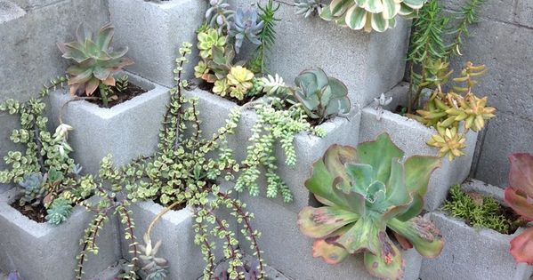 Cinder block succulents maybe spray paint blocks cinder - Painting cinder blocks for garden ...