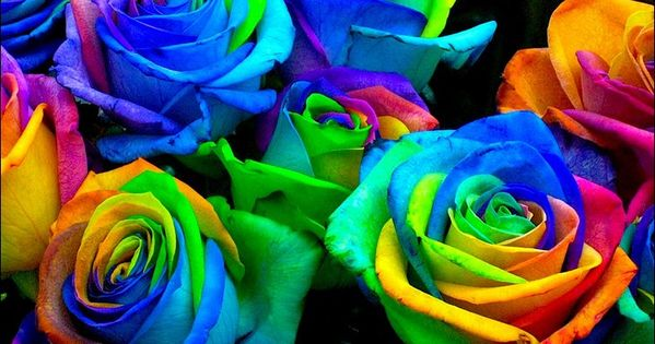 Another science fair idea: Make rainbow roses by splitting the stems into