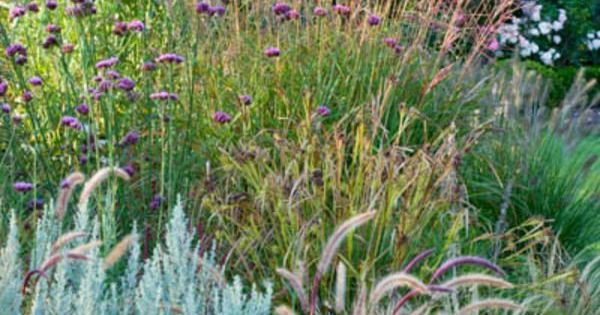 Mixing together different types of ornamental grasses for Small ornamental grasses for borders