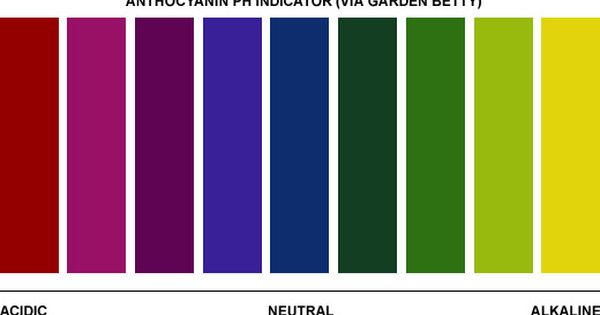 Why Purple Beans Turn Green After Cooking A Kitchen Magic Trick Garden Betty Purple Beans Purple Vegetables Purple