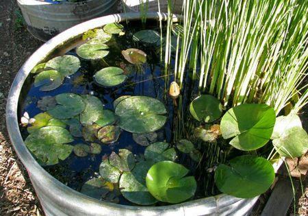 Creating a little backyard pond