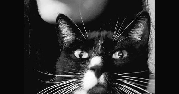 Milosc To Nie Pluszowy Mis Ani Kwiaty Cat Catlovers Withcat Kitty Lovemycat Meow Cat Feeding Cats Cat Tail