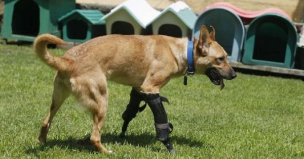 Pin On Animal Welfare Causes