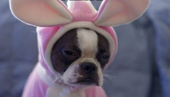Poor Puppy!!! I am not a fan of dressing up pets, every