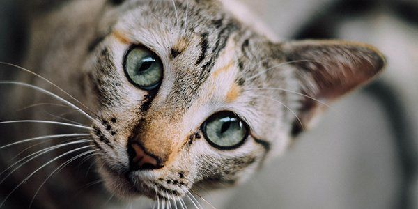 How To Stop Your Cat From Waking You Up In The Morning In 2020 Cats Pets Tortoise Shell Cat