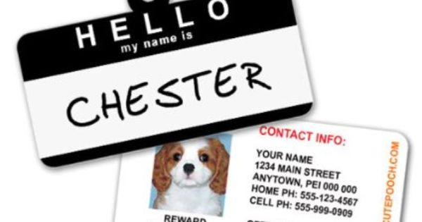 Amazon Com Hello Name Badge Custom Dog Tags For Pets Personalized Pet Id Tags Blue Available In 7 Colors Dog Id Tag Cat Id Tags With Pet Photo Ine