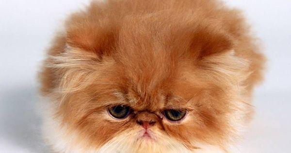 Babie cat or not
