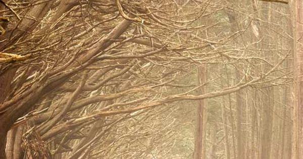 Fitzgerald Marine Reserve Cypress Trees Monterey Pine Moss Beach