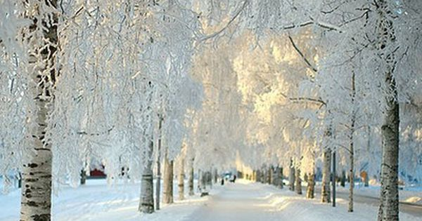 Let it snow! Absolutely beautiful I would LOVE to walk down a