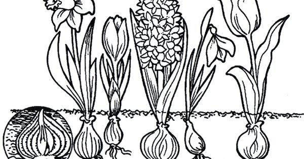 kleurplaat bloemen thema lente bloemen