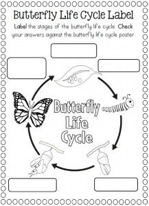 Life Cycle Of A Butterfly Coloring Page With Images Life