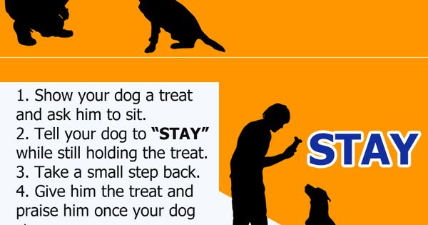 how to teach rescue dogs commands