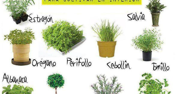 Plantas aromaticas pesquisa do google plantas for Jardinera plantas aromaticas