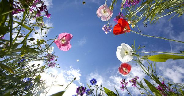 Lying In The Grass Staring At The Sky Not A Care In The World Wild Flowers Flowers In The Attic Flowers